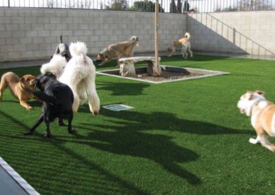 pets artificial turf