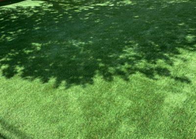 Fake Lawn Backyard